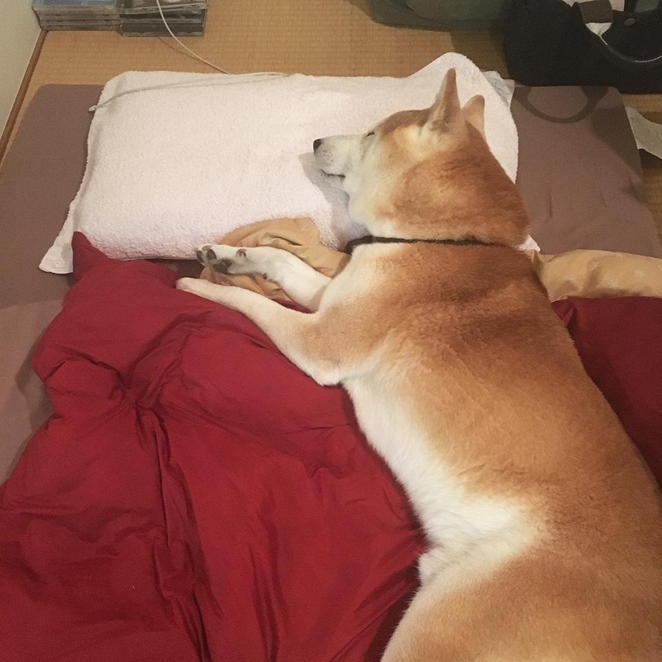 枕使って寝ます。