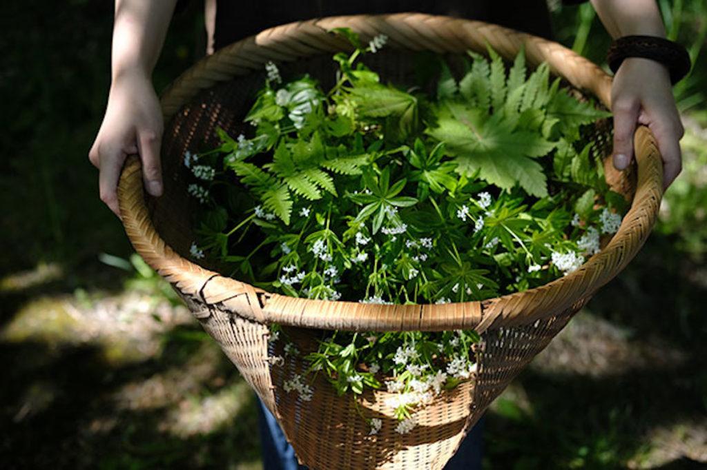 ワークショップ「食とドローイング」で叩き染めに使用した植物。photo:Yayoi Arimoto
