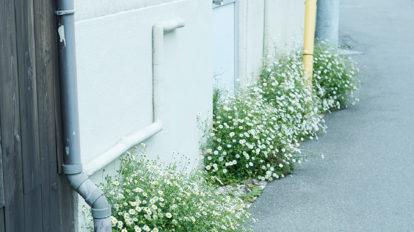 今月の写真家、今日の一枚。川村恵理 vol.19
