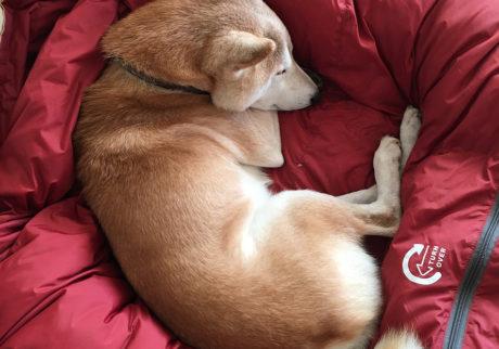 シバイヌ モクのベターな日々。お気に入りの寝袋。
