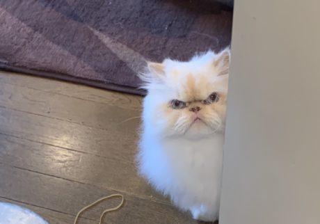 おじさん顔の猫ダイアリー、 ぼくはヒマである。趣味は監視です。
