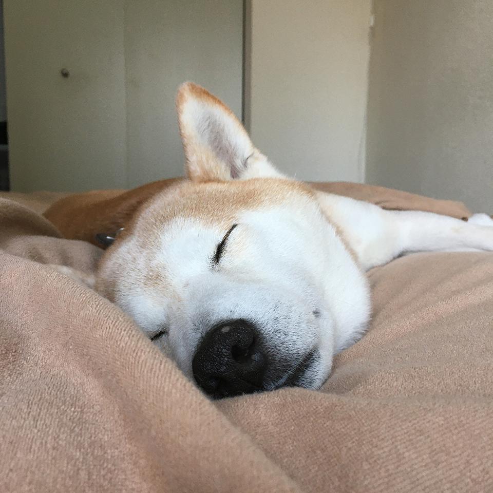 平和な寝顔。