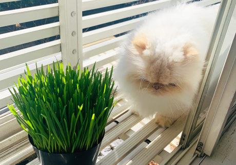 おじさん顔の猫ダイアリー、 ぼくはヒマである。猫草との遭遇。