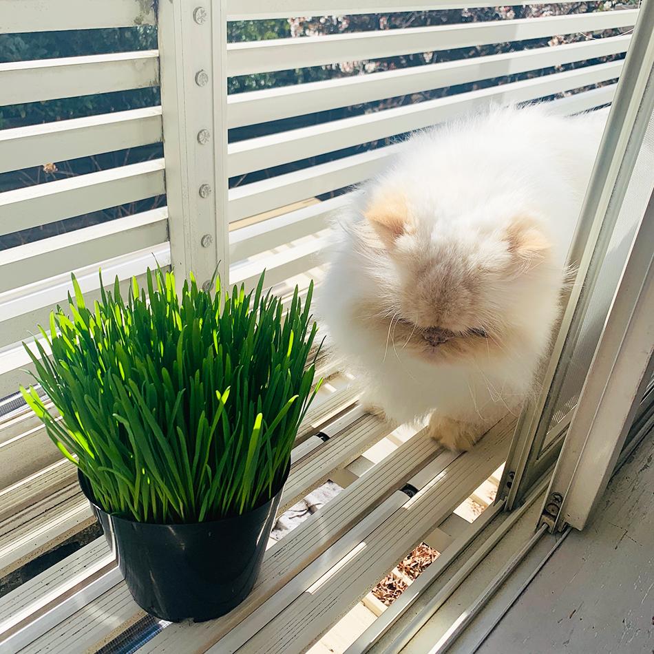 猫草との遭遇。