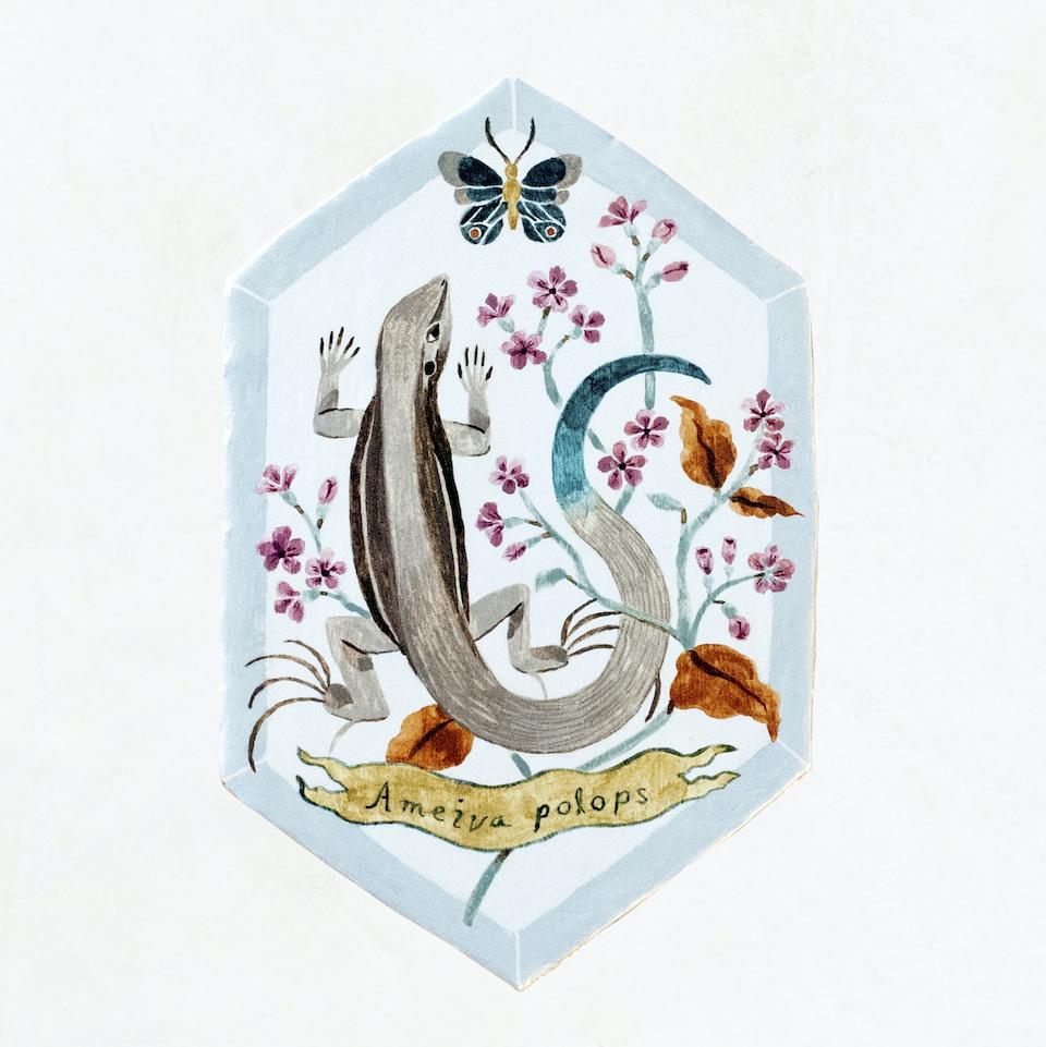 セントクロアオオトカゲ