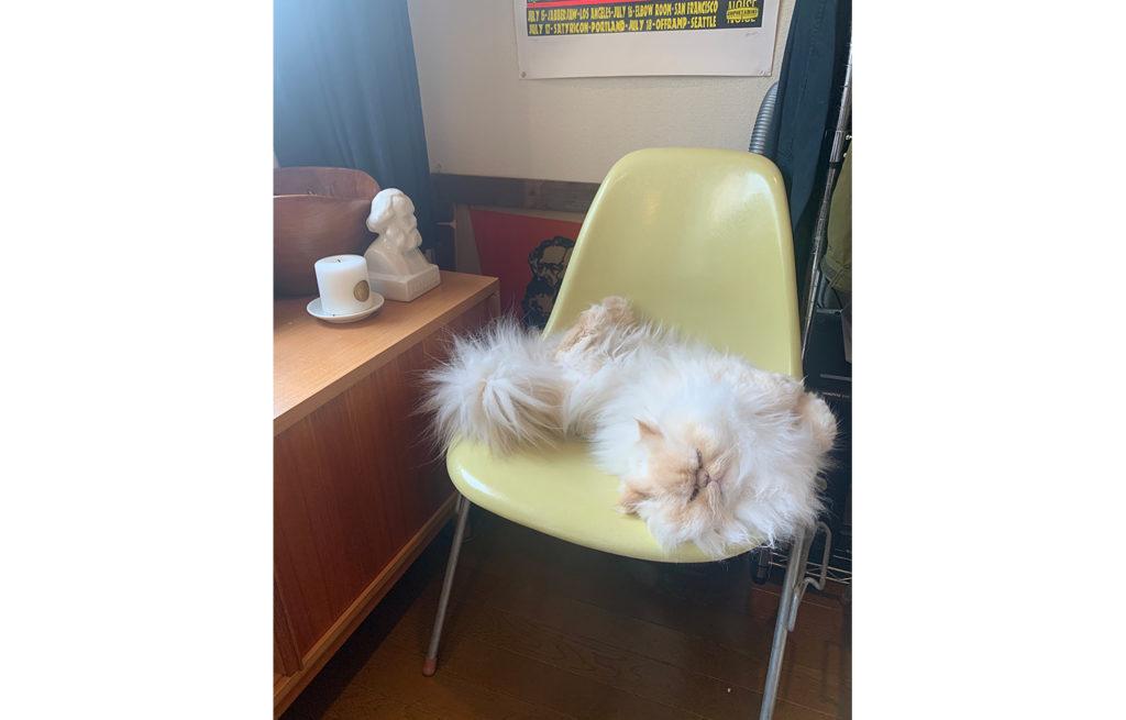 お気に入りの椅子。
