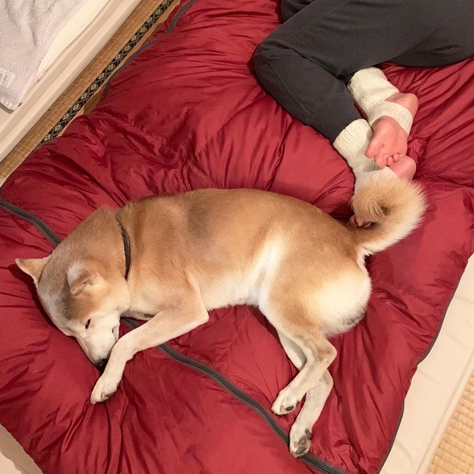 寝袋の定位置。
