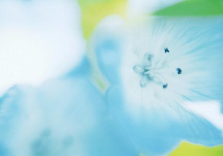 今月の写真家、今日の一枚。金本 凜太朗 vol.9