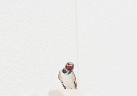 今月の写真家、今日の一枚。金本 凜太朗 vol.22