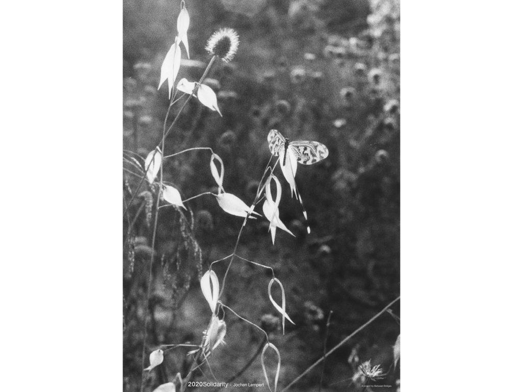 Jochen Lempert / Schmetterlingshaft