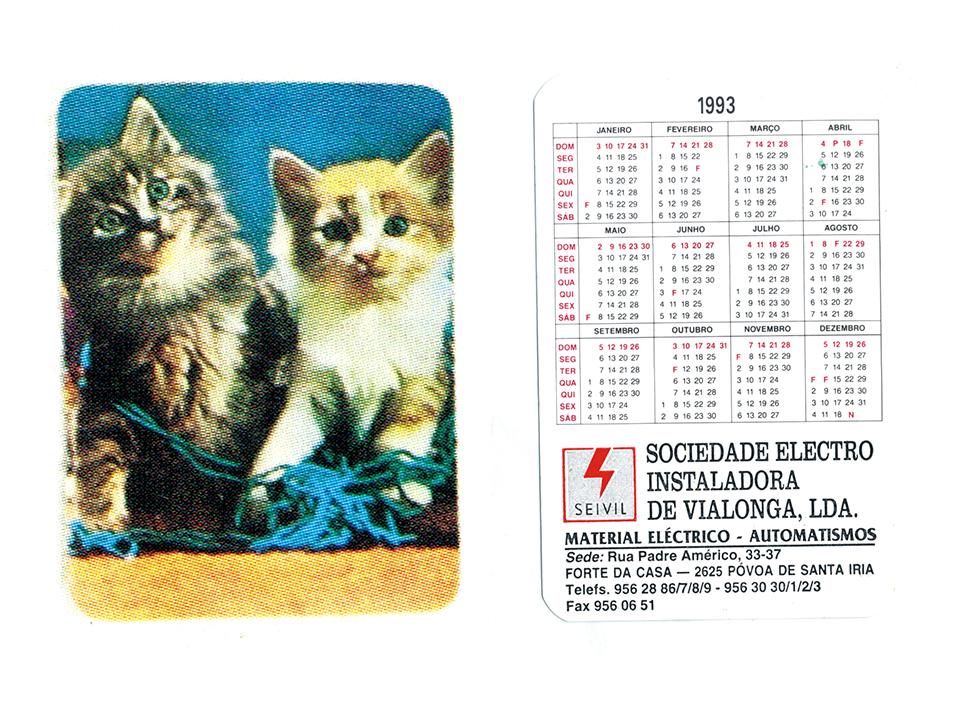 ポルトガルで見つけた猫ちゃん1993。