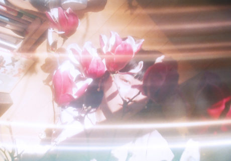 音楽家・青葉市子×写真家・小林光大が紡ぐ、旅と日々の記憶。Choe「花々」
