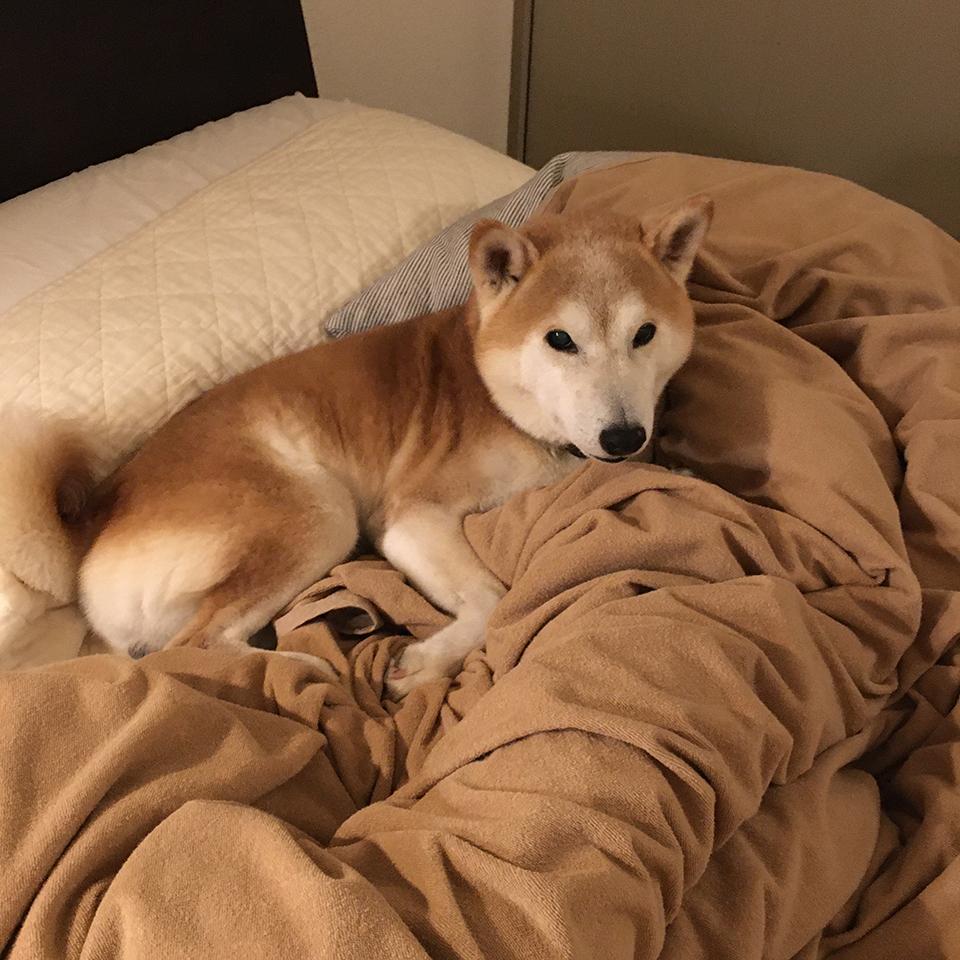 ベッドは早いもの勝ち。