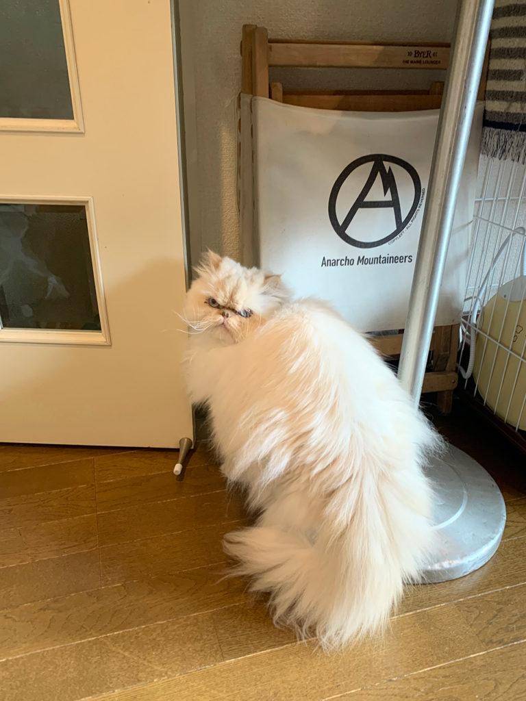ドア 自由に行き来 おじさん顔の猫 13