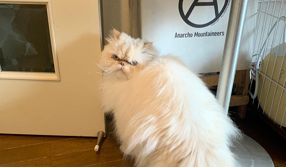 おじさん顔の猫ダイアリー、 ぼくはヒマである。ドアを開けてくれませんか?