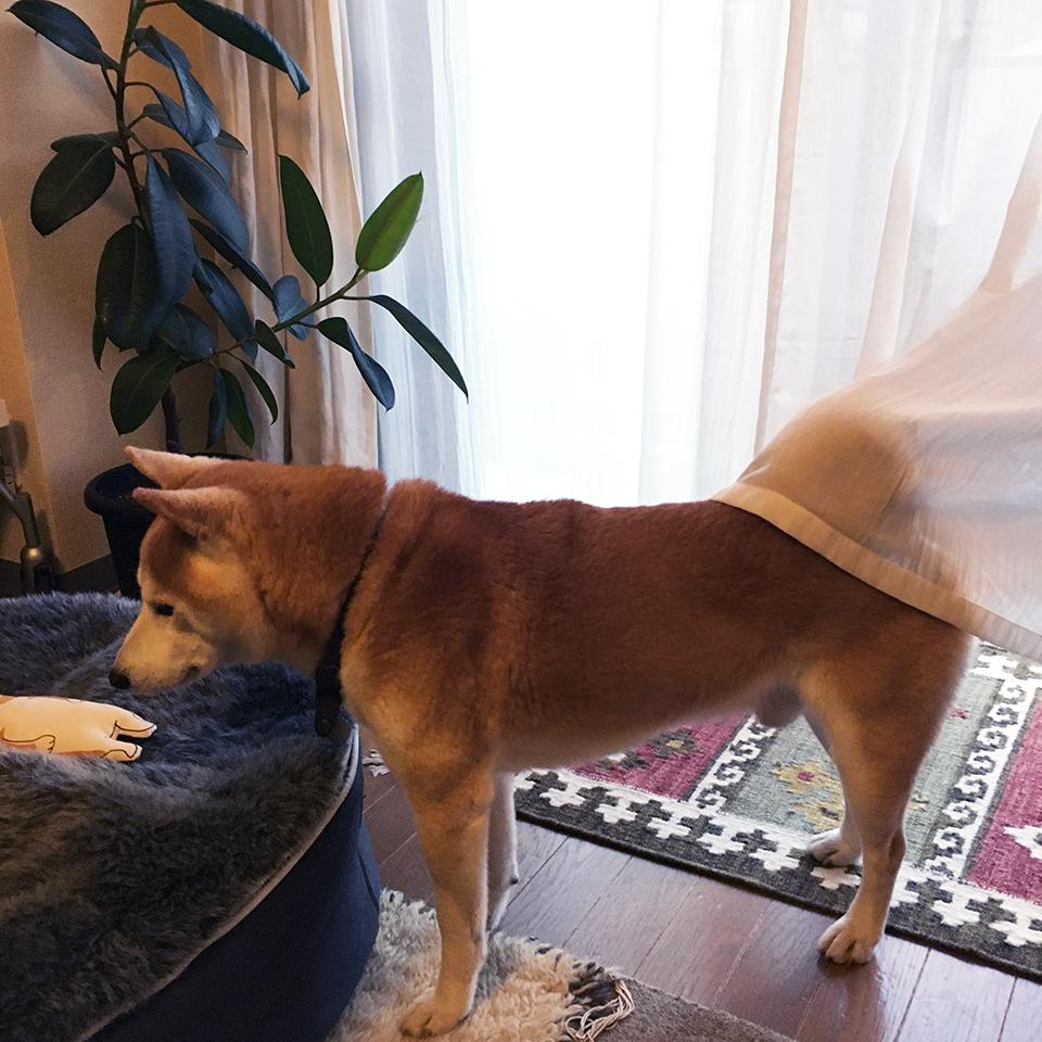 カーテンは引っかかるもの。