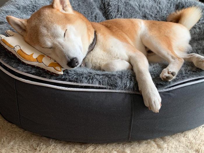 新しい枕。