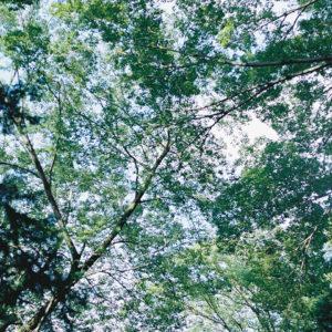 今月の写真家、今日の一枚。<i>大林直行 vol.5</i>