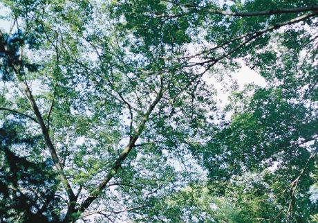 今月の写真家、今日の一枚。大林直行 vol.5