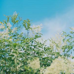 今月の写真家、今日の一枚。<i>大林直行 vol.12</i>