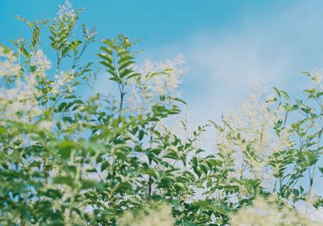 今月の写真家、今日の一枚。大林直行 vol.12