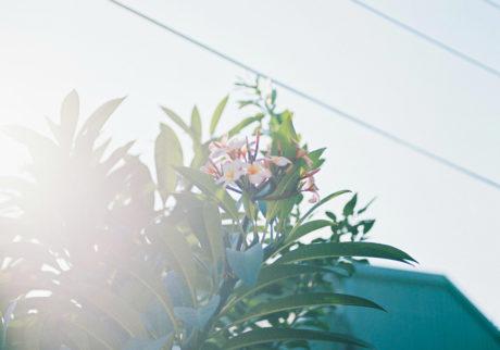 今月の写真家、今日の一枚。大林直行 vol.22