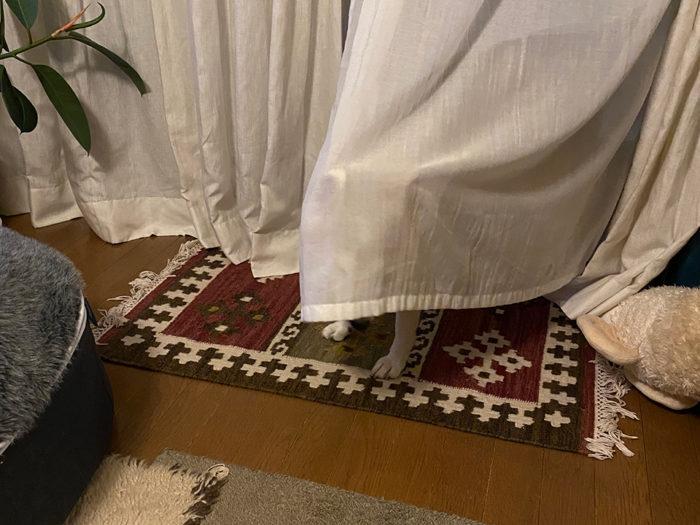 カーテンは夜も被ります1