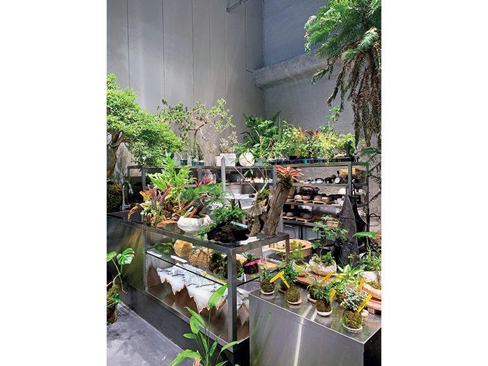 植屋の植物は苔玉や、店内の電気窯で焼き上げた鉢に植えられ販売されている。