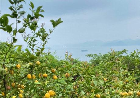 「レモンの夜」にて『mitosaya』のオー・ド・ヴィと菅原敏さんの新詩集を発表。