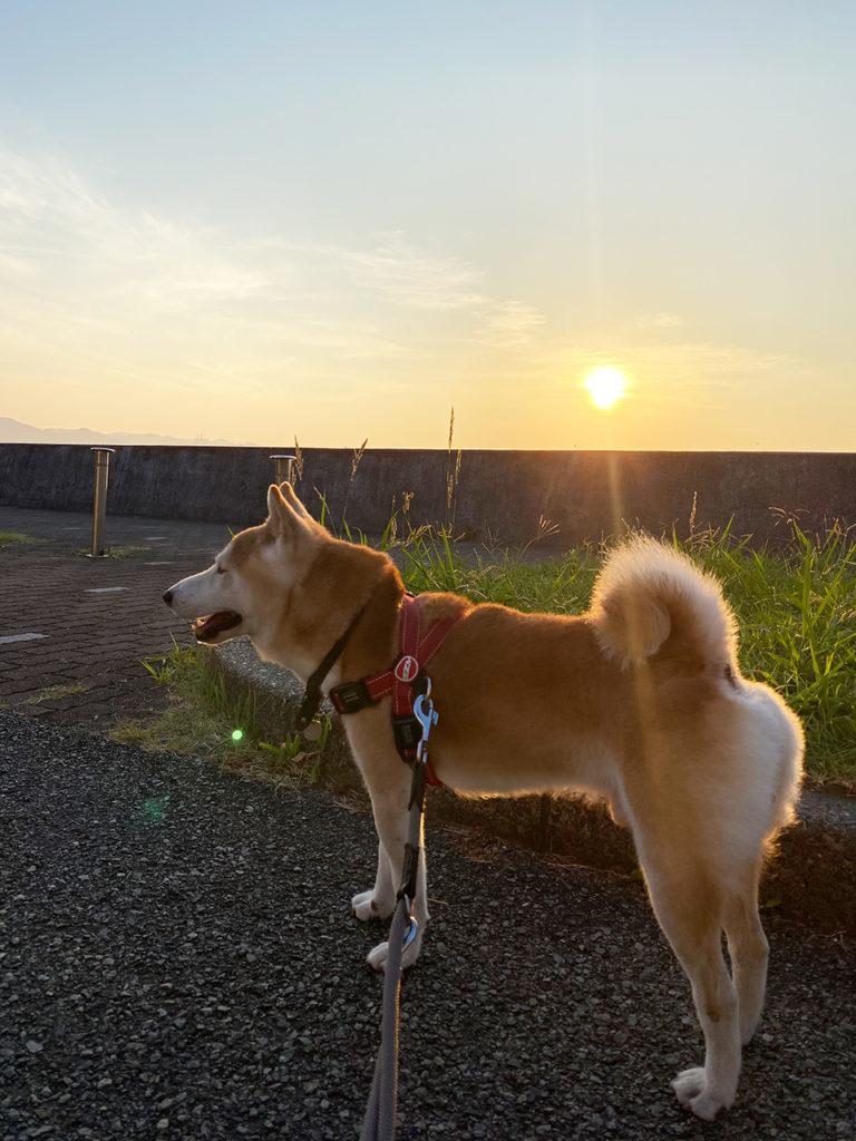 日の出とモク。