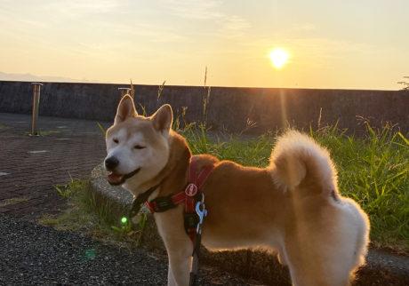 シバイヌ モクのベターな日々。日の出とモク。