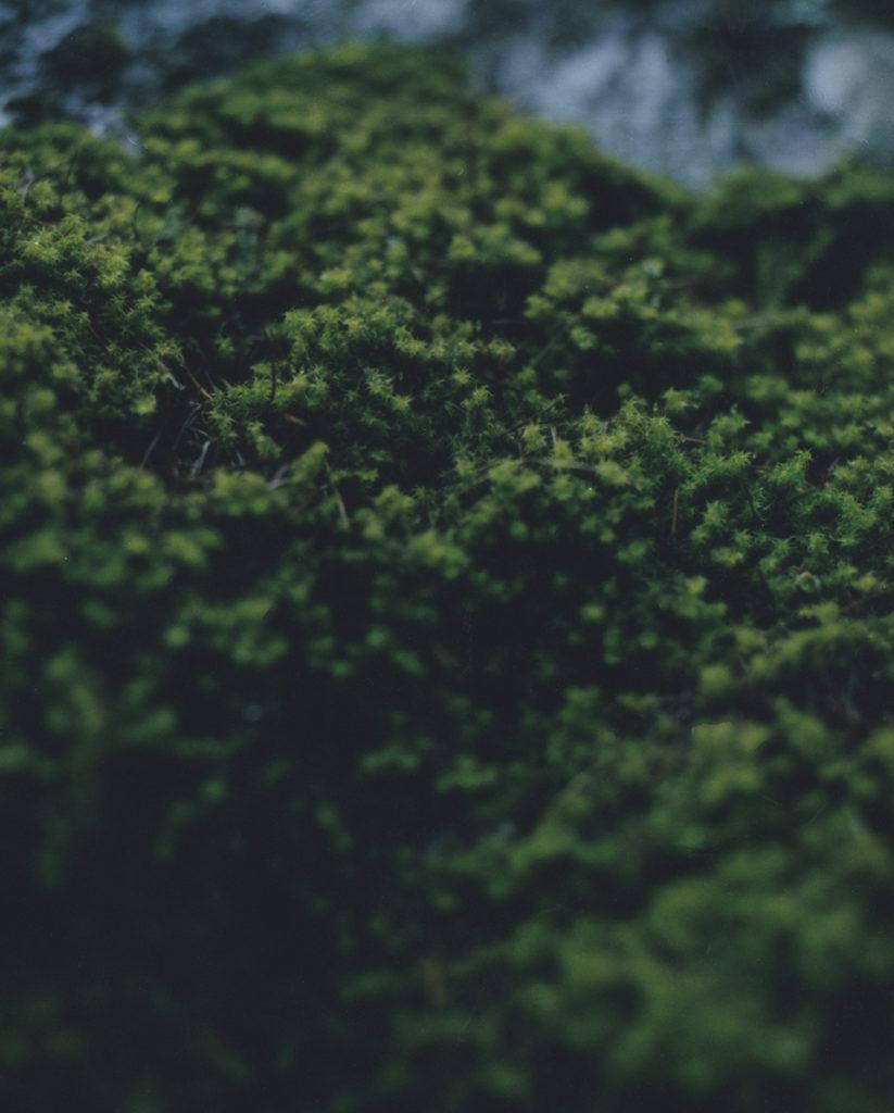 『静かなところにある美しさ』。#08