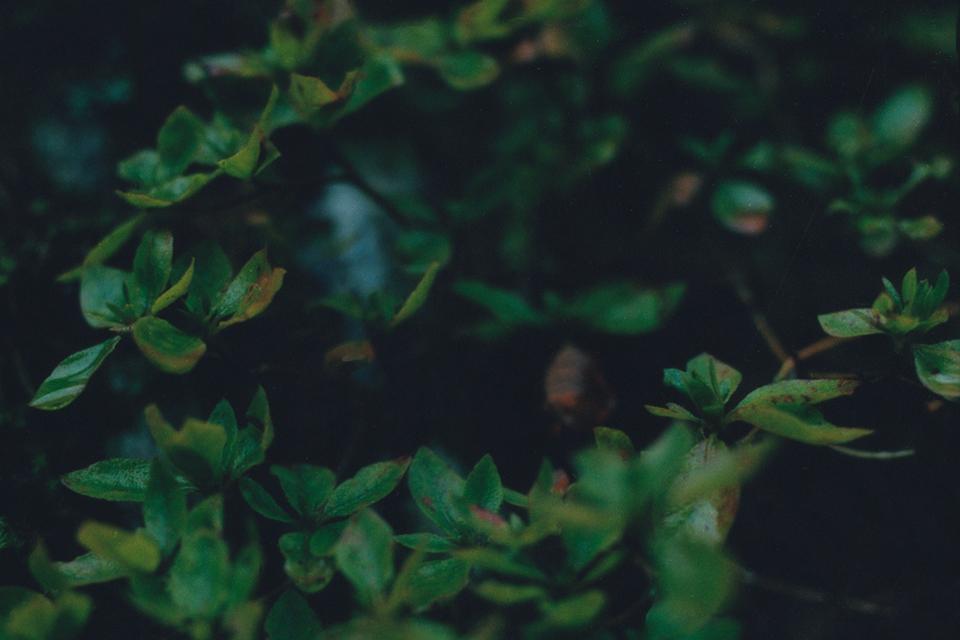 『静かなところにある美しさ』。#10