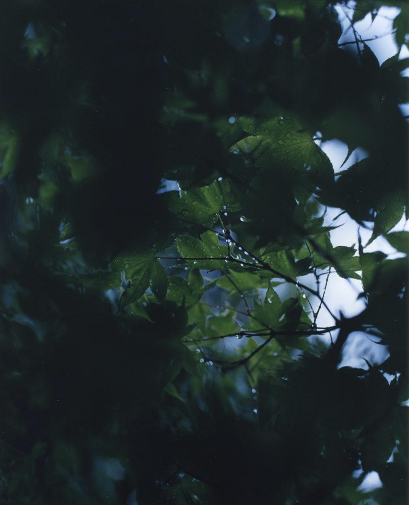 『静かなところにある美しさ』。#17