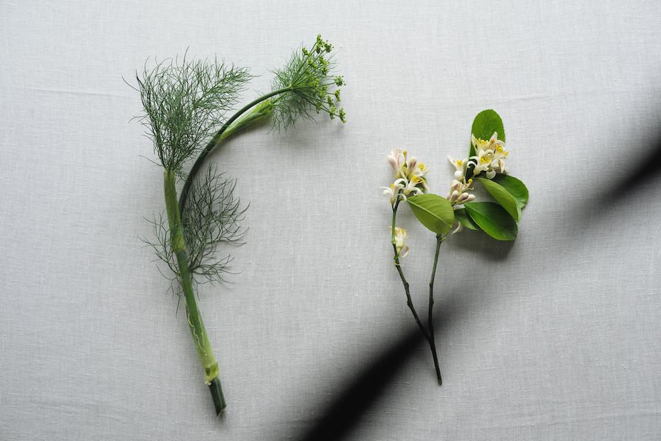 左/フェンネル、右/レモンの花。