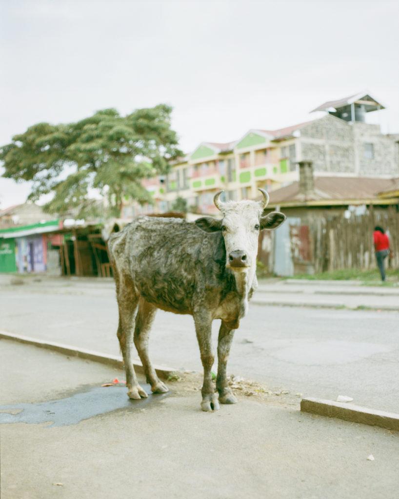 ナイロビからナクルへ。 お家から大きめの音楽が聞こえる。教会からも聞こえる。 私が振動するくらいの音量で聞こえてくる。
