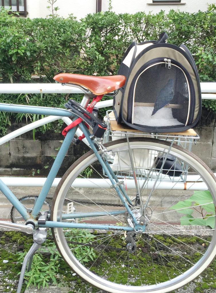 november_2_bike (1)