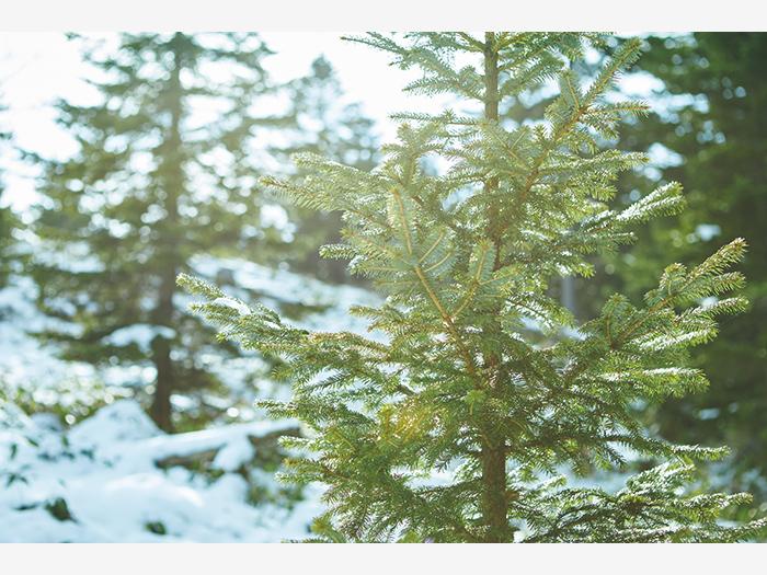 白湯山は阿寒湖の南に位置し、高さ950m。標高815mにある展望台へ向かう途中、雪景色が美しい。