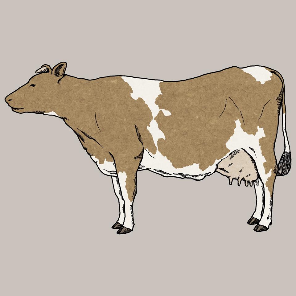 牛 | cow