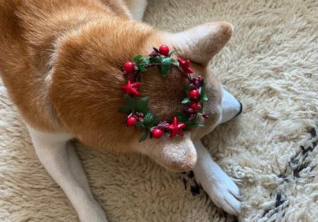 シバイヌ モクのベターな日々。クリスマスイヴ。