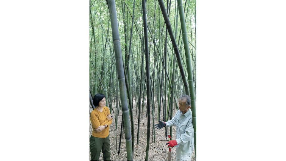 竹林の管理をする生産者の清水勝さんに話を聞く伊藤さん(左)。