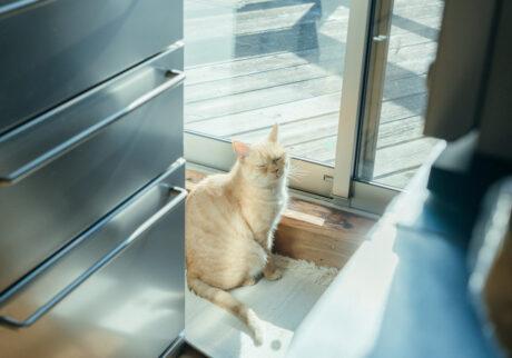 ふきげんな猫、ぶんぶん日記。 vol.3 春を感じたいんですけど。