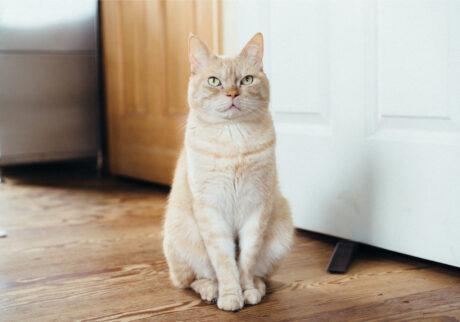 ふきげんな猫、ぶんぶん日記。 vol.4 朝のあいさつ。