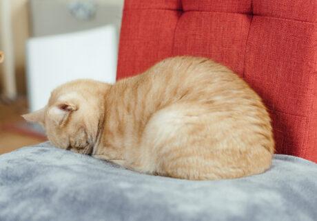 ふきげんな猫、ぶんぶん日記。 vol.5 邪魔しないで。