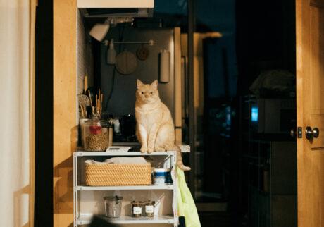 ふきげんな猫、ぶんぶん日記。vol.7 おなかすいた!