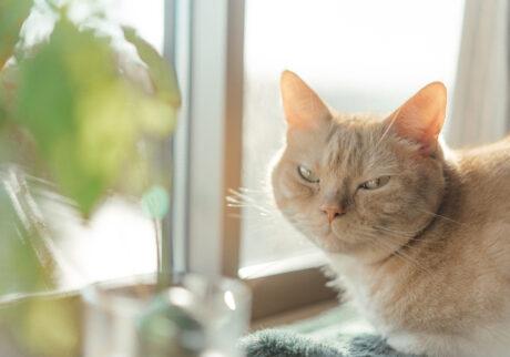 ふきげんな猫、ぶんぶん日記。vol.8 いつまで待たせるの?