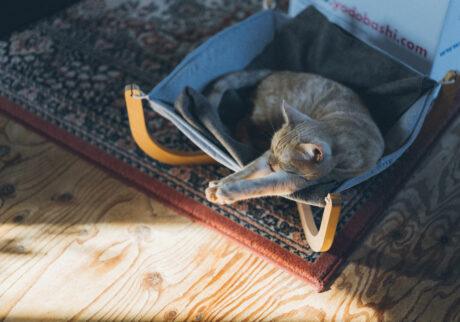 ふきげんな猫、ぶんぶん日記。 vol.9 セレブ的に。