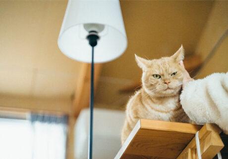 ふきげんな猫、ぶんぶん日記。 vol.10 余は満腹じゃ。