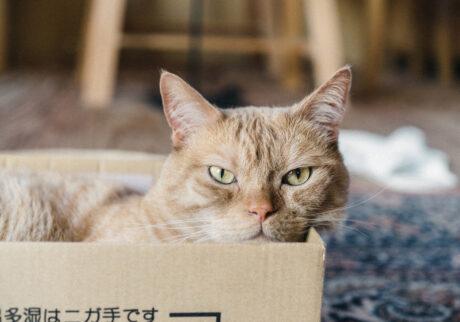 ふきげんな猫、ぶんぶん日記。 vol.13 チョコ、ください。
