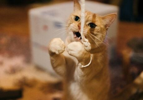 ふきげんな猫、ぶんぶん日記。vol.14 カッコ悪い日もある。